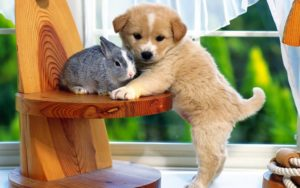 What You Need to Do Before Adopting a Pet