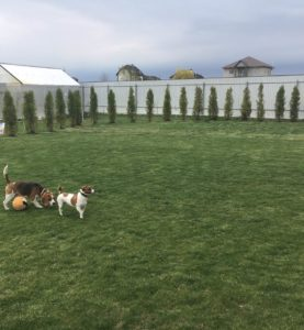 Dog-Friendly Landscaping
