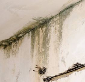 mold in the basement